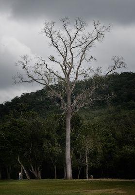 arbol muerto en la selva