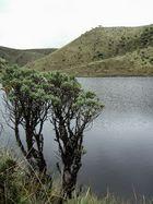 Arbol y Lago