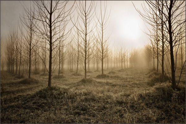 árboles infinitos