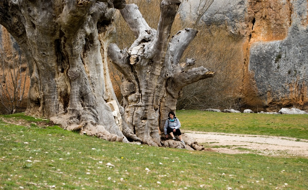 Arboles muertas, Cañon de rio Lobos, Burgos