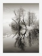 árboles vanos en invierno