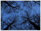 Arboles y cielo en el krepusculo