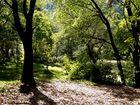 arbol_hojas secas
