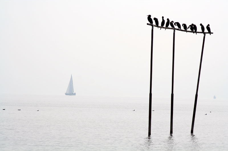 Arbon erwacht aus dem Nebel