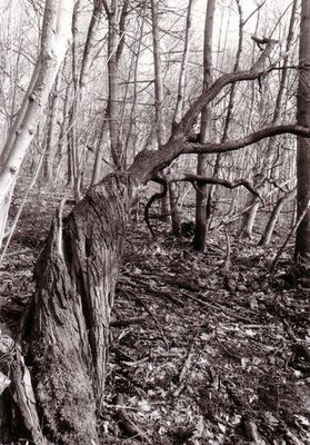 arboreal contortion