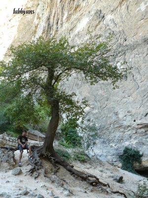 arbre a Fontaine du Vaucluse
