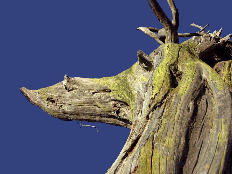 arbre cheval