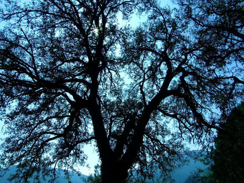 arbre contre jour