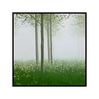 Arbre dans la brume N°1
