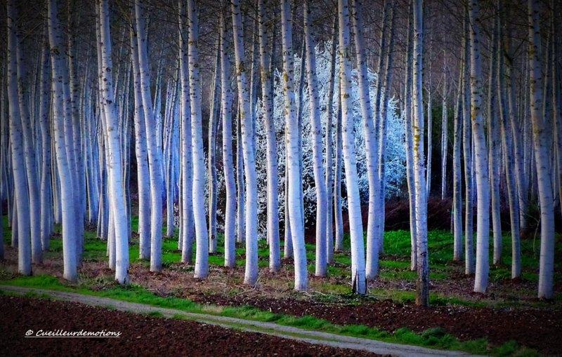 arbre dans la forêt