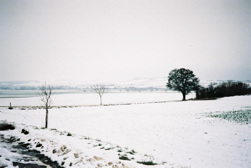 Arbre des neiges