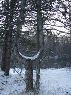 arbre diapason
