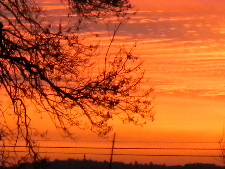 arbre en ciel rouge