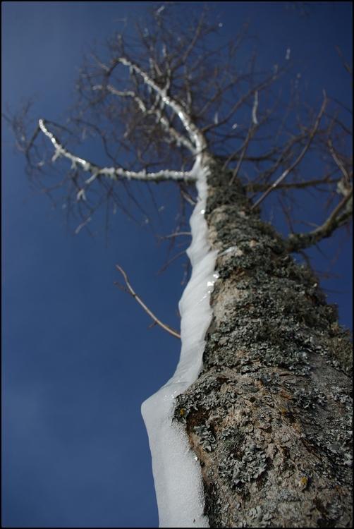 arbre en gelée