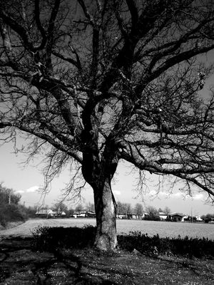arbre en noir et blanc