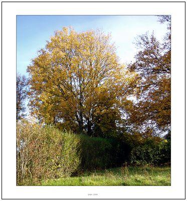 arbre en peine