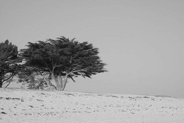 arbre en plage
