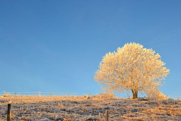 arbre ensoleillé