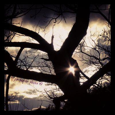 arbre filtrant