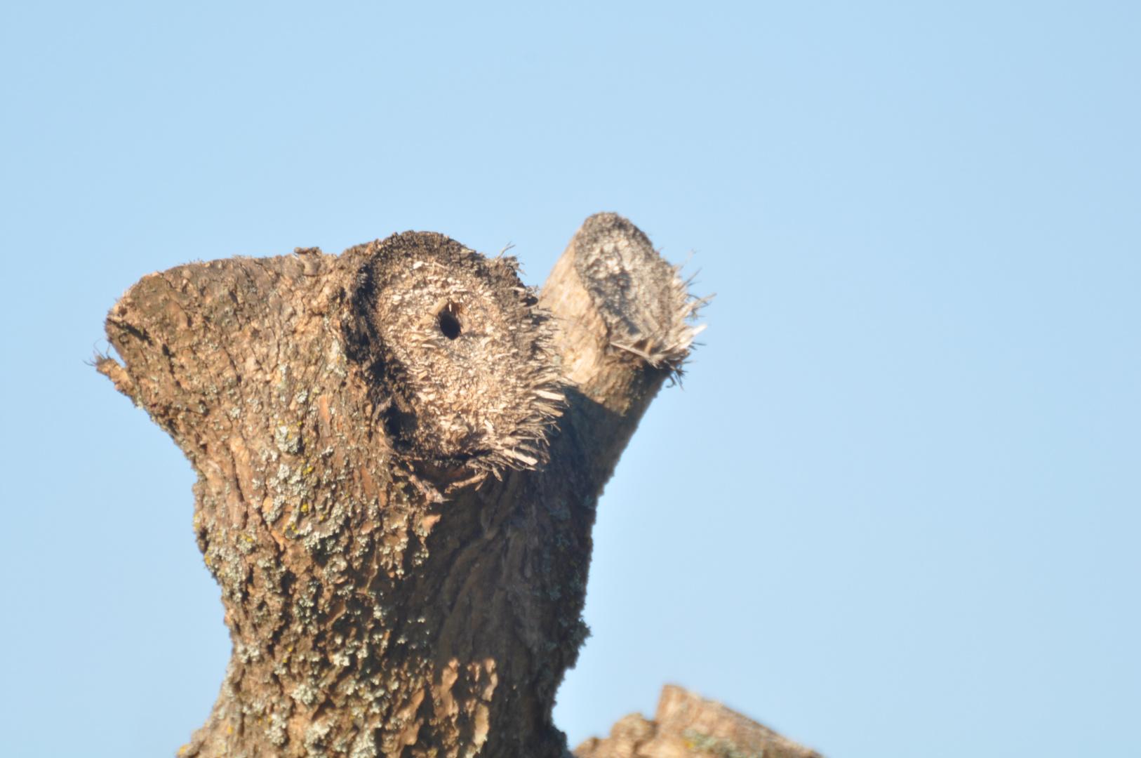 arbre meurtri