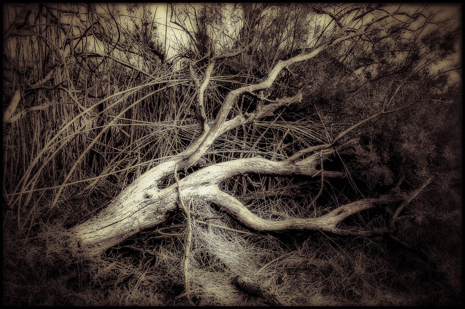 arbre mort photo et image arbres nature images fotocommunity. Black Bedroom Furniture Sets. Home Design Ideas