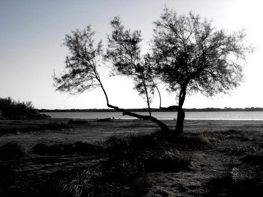 Arbre perdu sur la plage à Montpellier