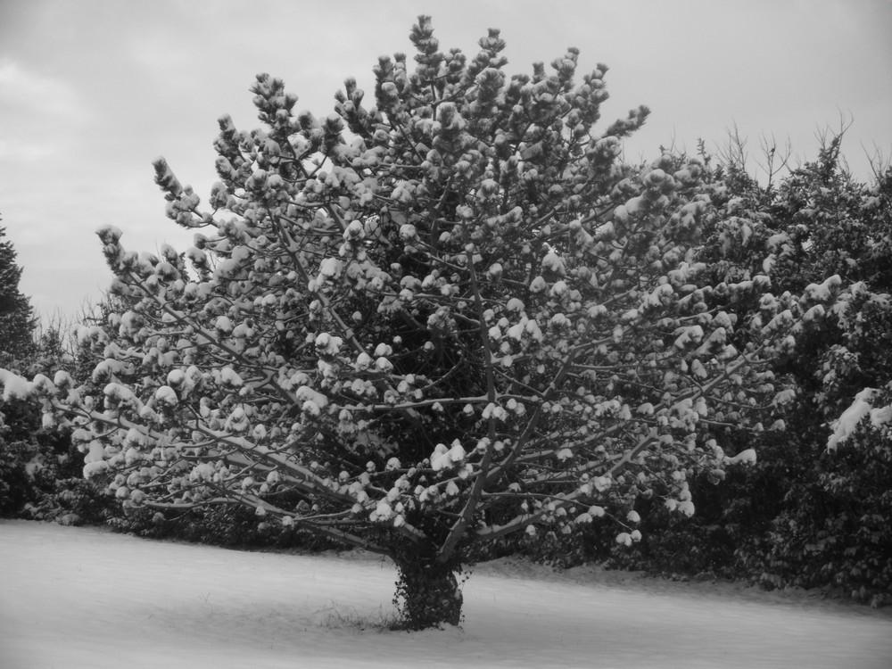 Arbre sous la neige