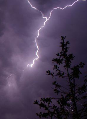Arbre sous une pluie d'éclairs