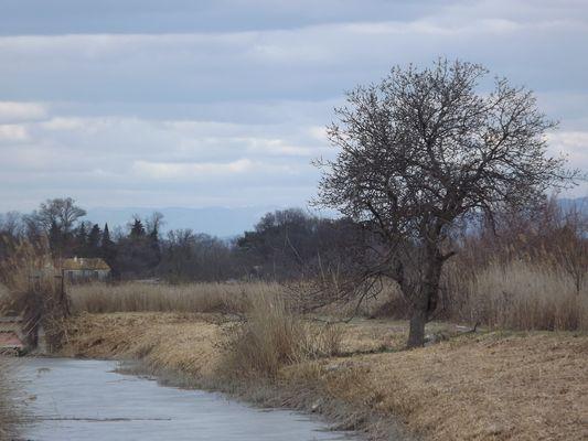 arbre sur la riviere gelee