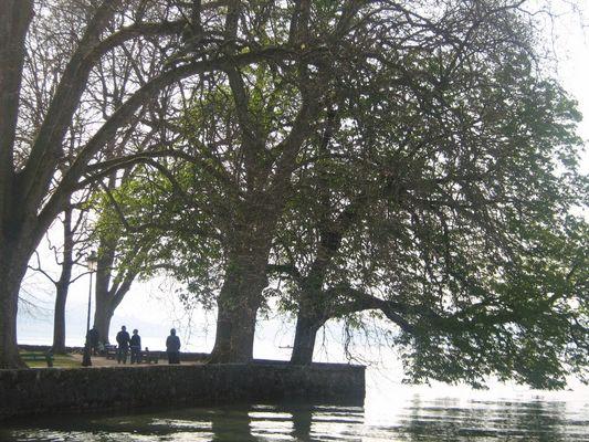 arbre sur le lac