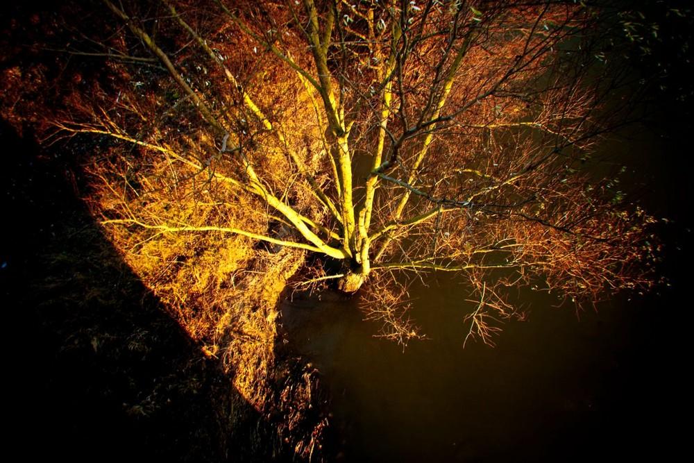 arbre toujours