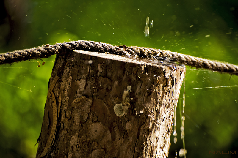 Arbre & water
