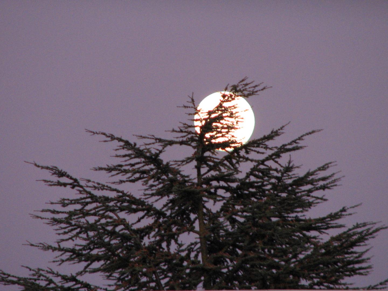 Arbre&lune