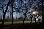 Arbres, ciel et soleil : qu'elle est belle, la nature
