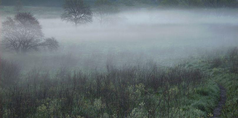 Arbres dans la brume matinale.