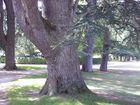 arbres dans le parc du chateau de chenonceaux
