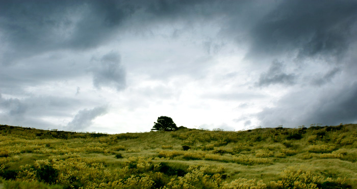 Arbres dans le pré du ciel tourmenté...