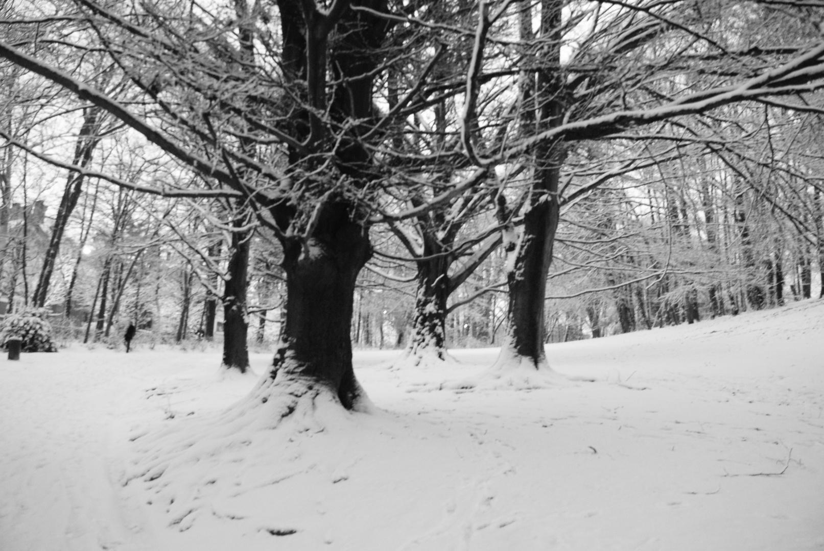 Arbres de neige