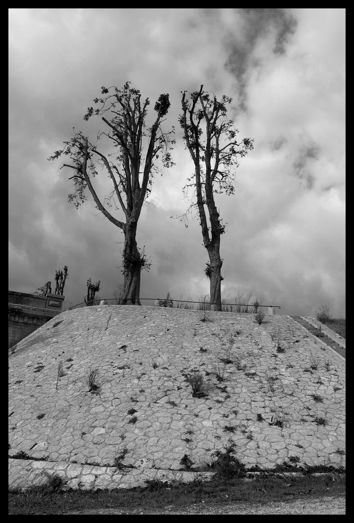 arbres du centre