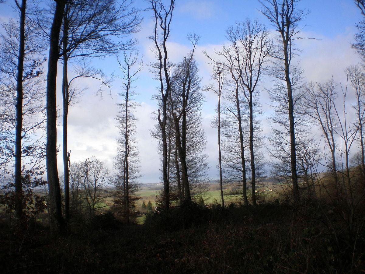 arbres en decembre sur fond de paysage
