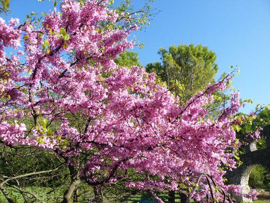 Arbres en Fleurs dans la Drôme