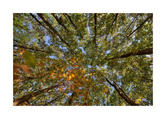 arbres et feuilles (1)