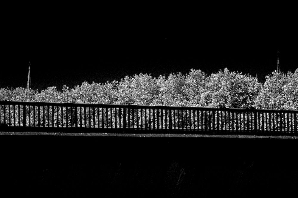 arbres et reste