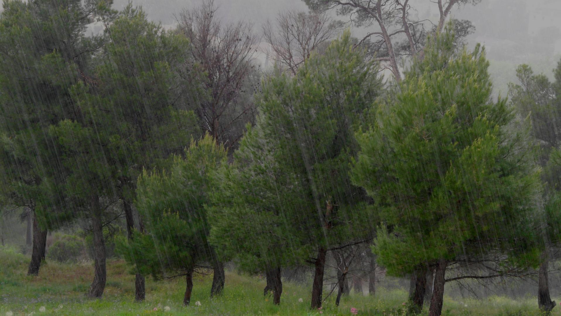 Arbres et rideau de pluie.