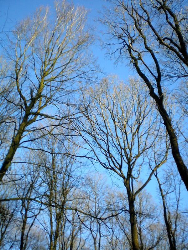 arbres nus dans l'hiver