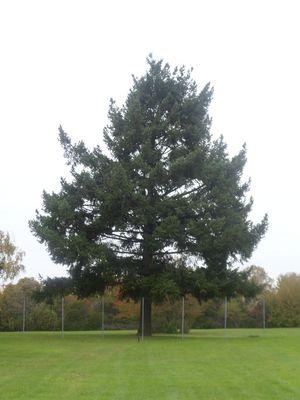 arbres que j'aime bien