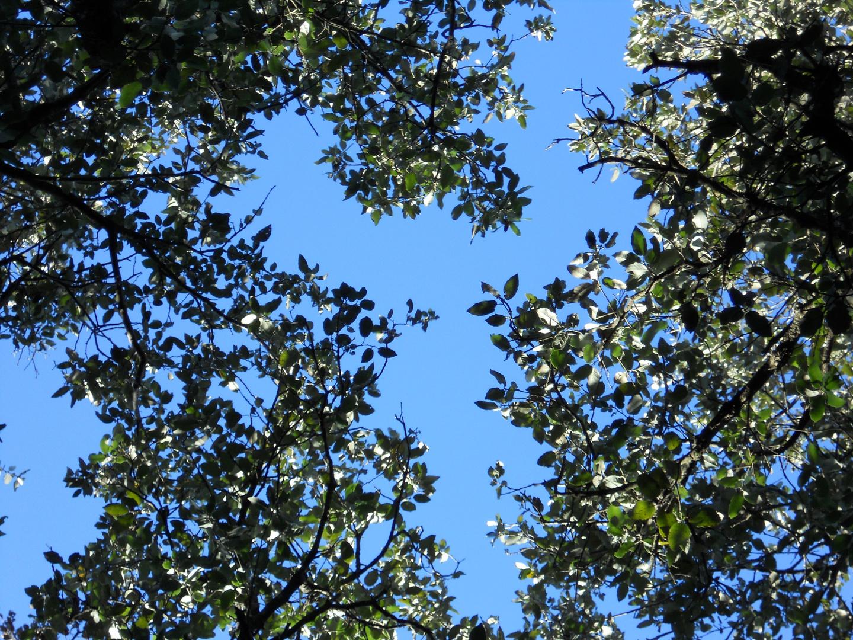 arbres sous le ciel
