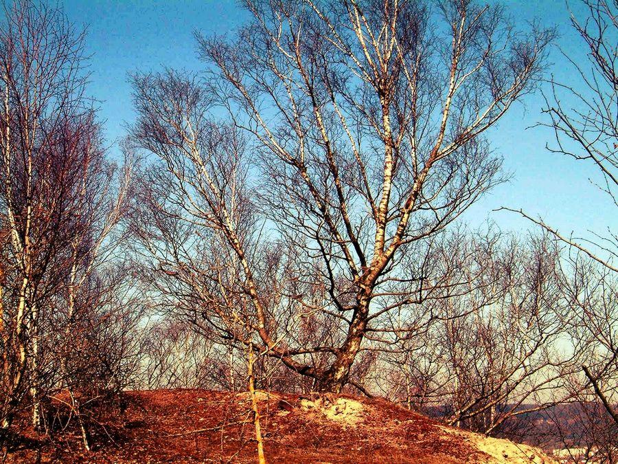 arbres sur le pain de sucre