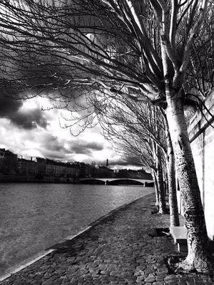 Arbres sur Seine
