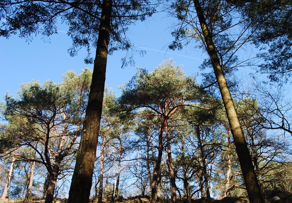 arbres trop grands
